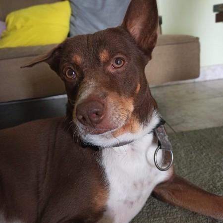 Choco, the mama's boy
