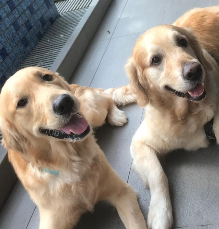 Hoomans say we are handsome and they are right