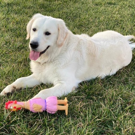 My name is Bo and here's my fav toy